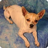 Adopt A Pet :: Miss - Dallas, TX