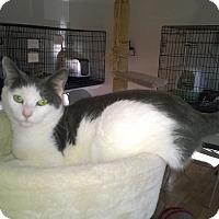 Adopt A Pet :: Cammy - Speonk, NY