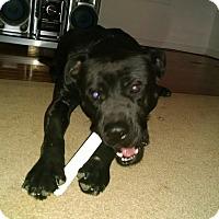 Adopt A Pet :: Onyx - Richmond, VA