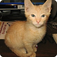 Adopt A Pet :: Peaches - Reston, VA
