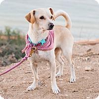 Adopt A Pet :: Rosilee - Encino, CA