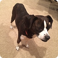 Adopt A Pet :: Betsy - New Oxford, PA