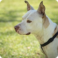 Adopt A Pet :: Breanna - Daleville, AL