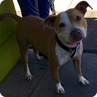 Adopt A Pet :: Joy - Phoenix, AZ