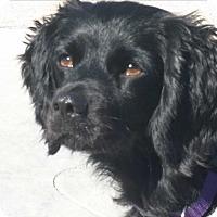 Adopt A Pet :: Margo - Santa Barbara, CA