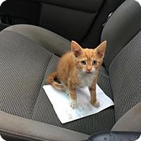 Adopt A Pet :: Scout - Devon, PA