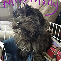Adopt A Pet :: MISS MOLLY - Gustine, CA