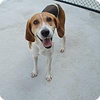 Adopt A Pet :: Elsa - Prince George, VA