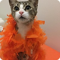 Adopt A Pet :: LIBERTY - Burlington, NC