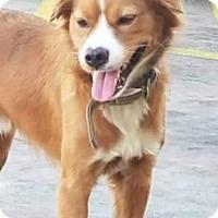Adopt A Pet :: Roscoe - Birmingham, AL