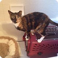 Adopt A Pet :: Ying and Yang - Hartland, MI