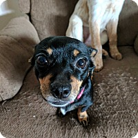 Adopt A Pet :: Peggy - DeForest, WI