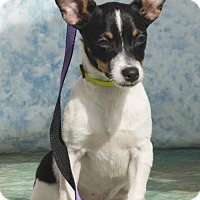 Adopt A Pet :: Pino - Alpharetta, GA