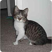 Adopt A Pet :: Aladdin - Davis, CA