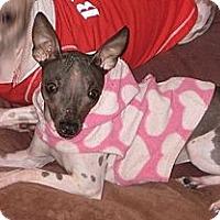 Adopt A Pet :: Hadassah - Topeka, KS