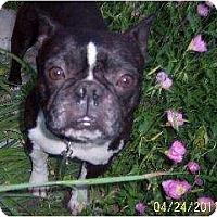 Adopt A Pet :: Stubby - Temecula, CA