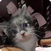 Adopt A Pet :: Kirby - Barnegat, NJ