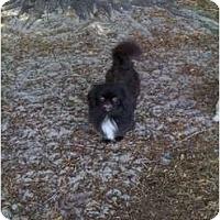 Adopt A Pet :: Baby - Orlando, FL