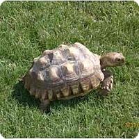 Adopt A Pet :: LEO & CLEO - Gilbert, AZ
