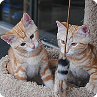 Adopt A Pet :: Rusty & Tobie - Palmdale, CA
