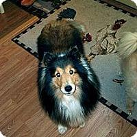 Adopt A Pet :: Melody - Alderson, WV