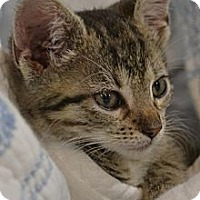 Adopt A Pet :: Harts & Haide - Island Park, NY