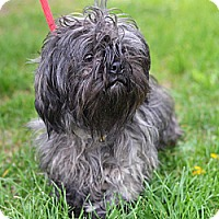 Adopt A Pet :: Rocket - Springfield, IL
