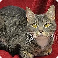 Adopt A Pet :: Lina - Oyster Bay, NY