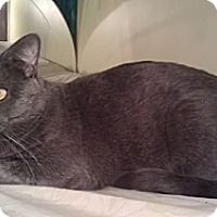 Adopt A Pet :: Sterling - Cranford/Rartian, NJ