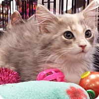 Adopt A Pet :: Becall, Lauren - Harrisburg, NC