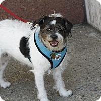 Adopt A Pet :: TASHIE - Encino, CA