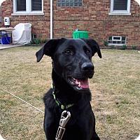 Adopt A Pet :: Zoie - Chicago, IL