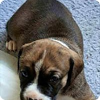 Adopt A Pet :: Zuma - Marlton, NJ