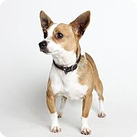 Adopt A Pet :: Baxter - Oakland, CA