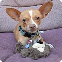 Adopt A Pet :: Kirby - San Jose, CA