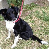 Adopt A Pet :: HATTIE - San Pedro, CA