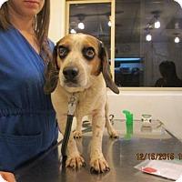 Adopt A Pet :: Missy - Williston Park, NY