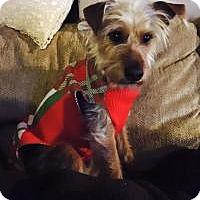 Adopt A Pet :: Murphy - Joliet, IL