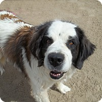 Adopt A Pet :: Lucy - Sparks, NV