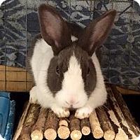 Adopt A Pet :: Caroline - Woburn, MA