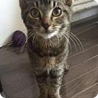 Adopt A Pet :: Lou - Brooklyn, NY