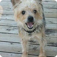 Adopt A Pet :: Oliver (MI) - Grand Rapids, MI