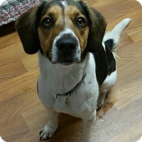 Adopt A Pet :: Claire - Lisbon, OH