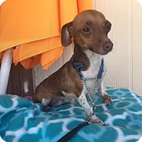 Adopt A Pet :: Kassidy - Elk Grove, CA