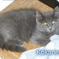 Adopt A Pet :: Kokanee - Campbell River, BC