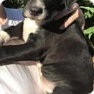 Adopt A Pet :: Baby Stitch
