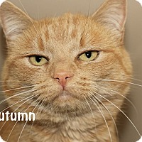 Adopt A Pet :: Autumn - Idaho Falls, ID