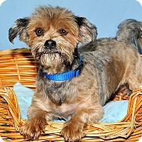 Adopt A Pet :: Holly - Gatineau, QC