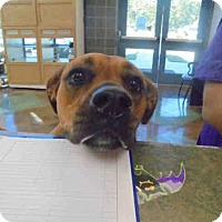 Adopt A Pet :: ROXY - Lacombe, LA