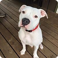 Adopt A Pet :: Lola - Salem, OR